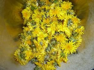 Löwenzahnblüten für Gelee