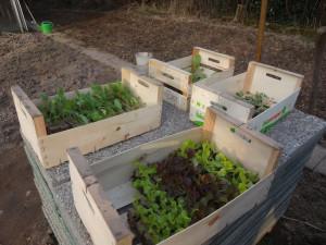Im Märzen der Bauer …..oder Gertraud den Garten baut