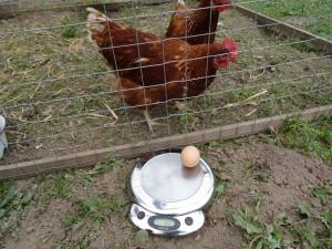Berta legt die größten Bio-Eier