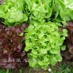 Salat 18. Mai