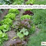 Mischkultur Mangold, Salat, Gurken, Dill, Lupinen mit Text
