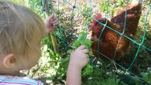 Ein mobiles Hühnerhaus für unseren Garten