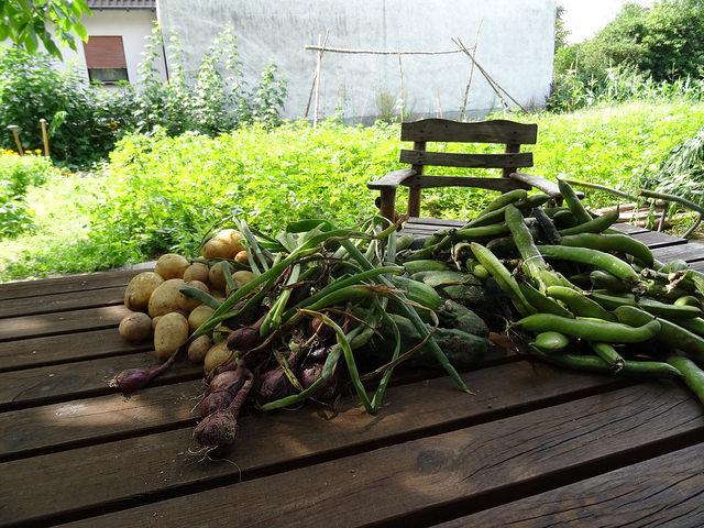 Gartenküche Tausendschön helfen, ernten und genießen