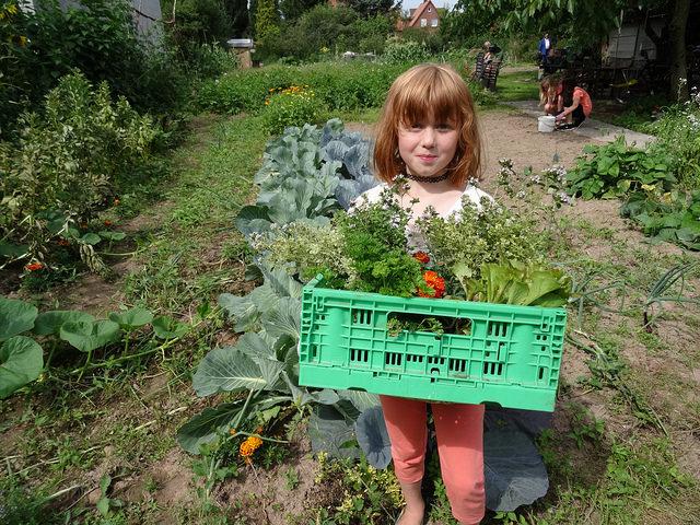 Helfen, ernten und genießen in der Gartenküche