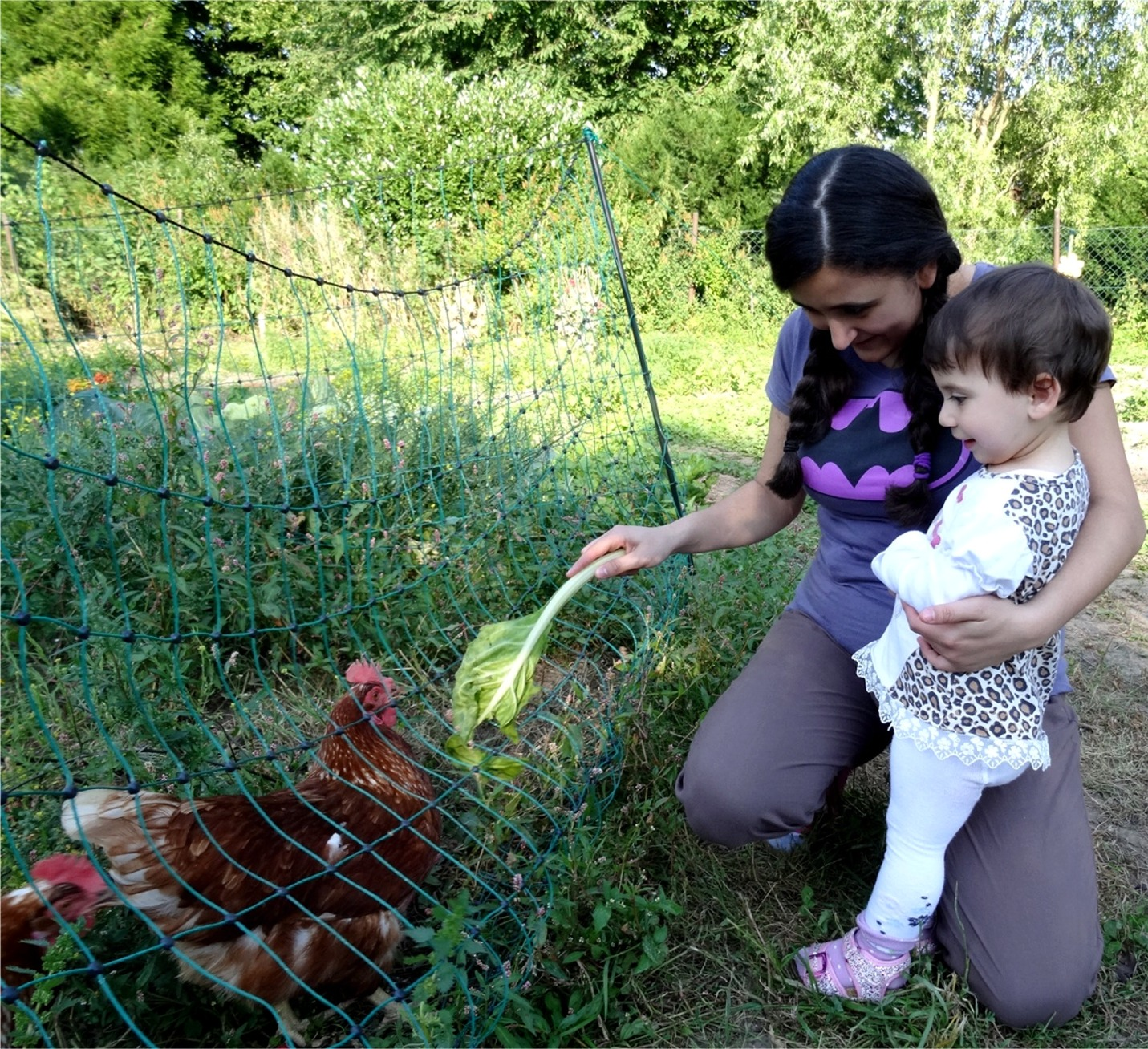 Mobiler Hühnerstall Bildung für nachhaltige Entwicklung BNE