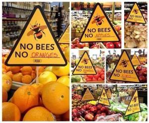 Bienen sterben aus