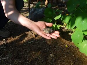 Buchfink in Nöten