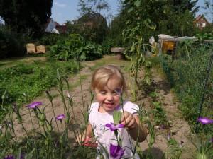 Auf der Suche nach Schmetterlingen