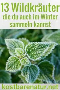 Essbare Wildkräuter im Winter