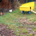 Freilauf Hühner