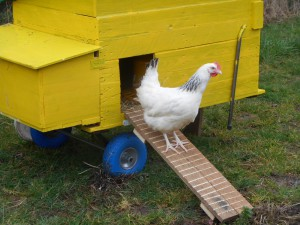 Mobiler Hühnerstall – Chickentraktor