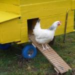 Hühnerleiter
