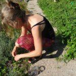 Lavendel - der Duft der Provence