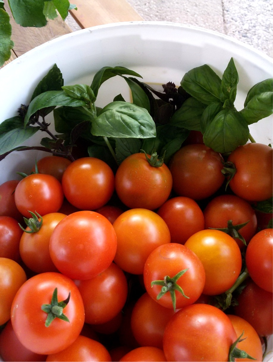 tomatenparadies