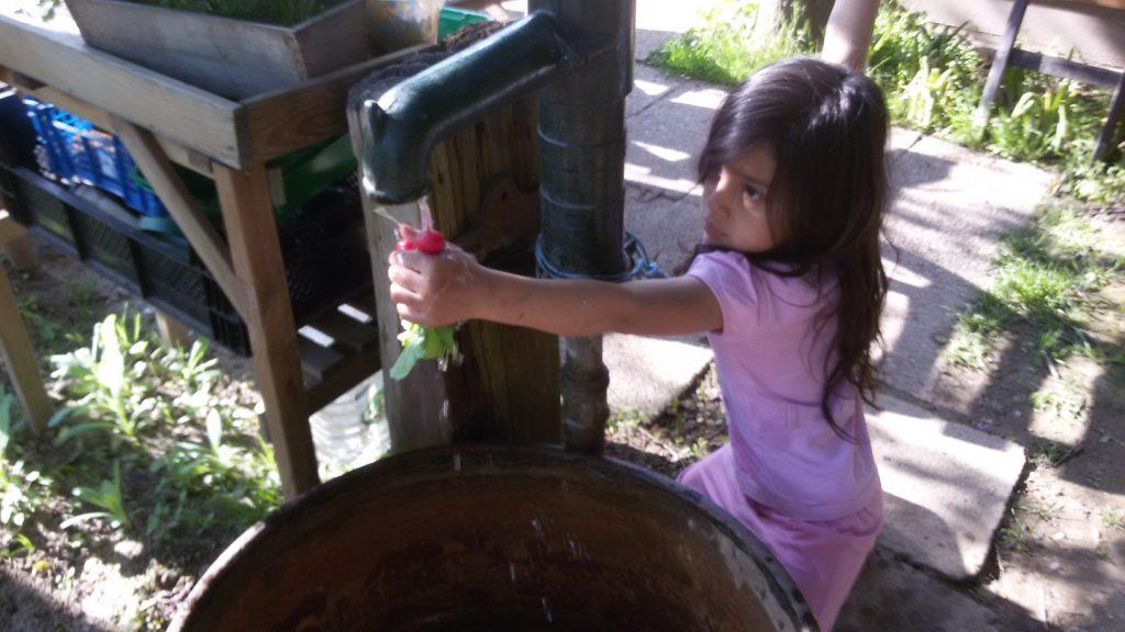 Radieschen Brunnen