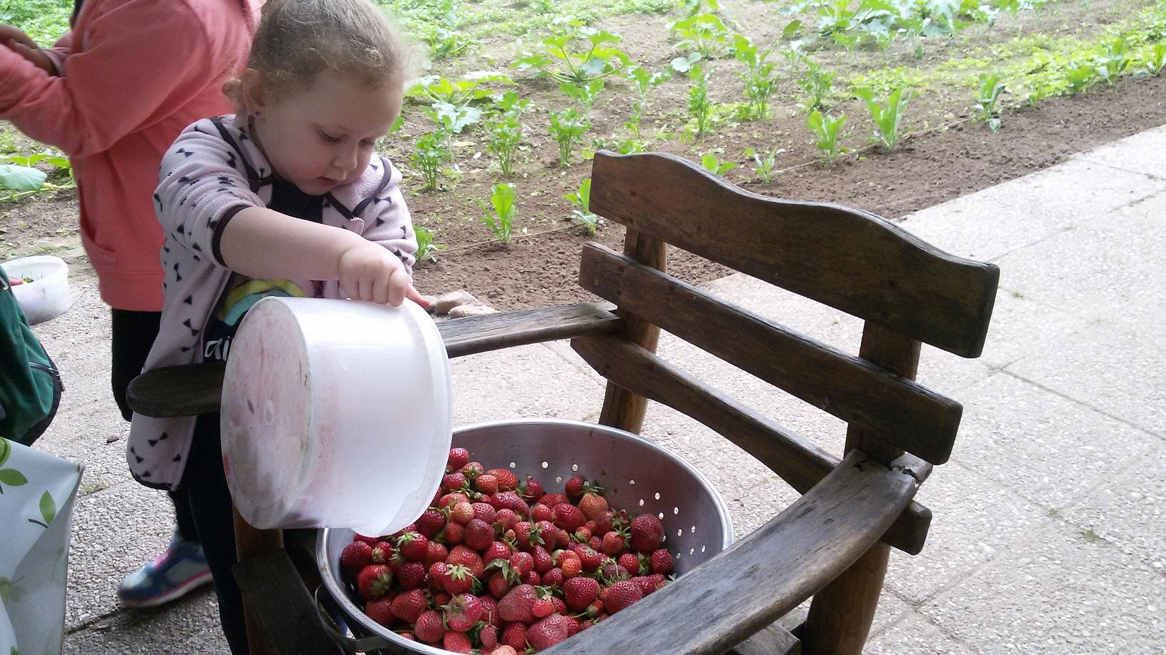 Ernte teilen Erdbeeren Melina