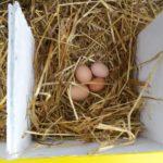 8 Eier