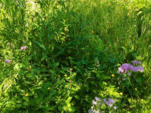 Ein Platz und Futter für Bienen, Hummeln, Schmetterlinge
