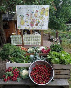Wir teilen die Ernte