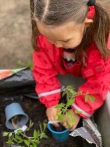 Gartenkinder topfen Tomaten um